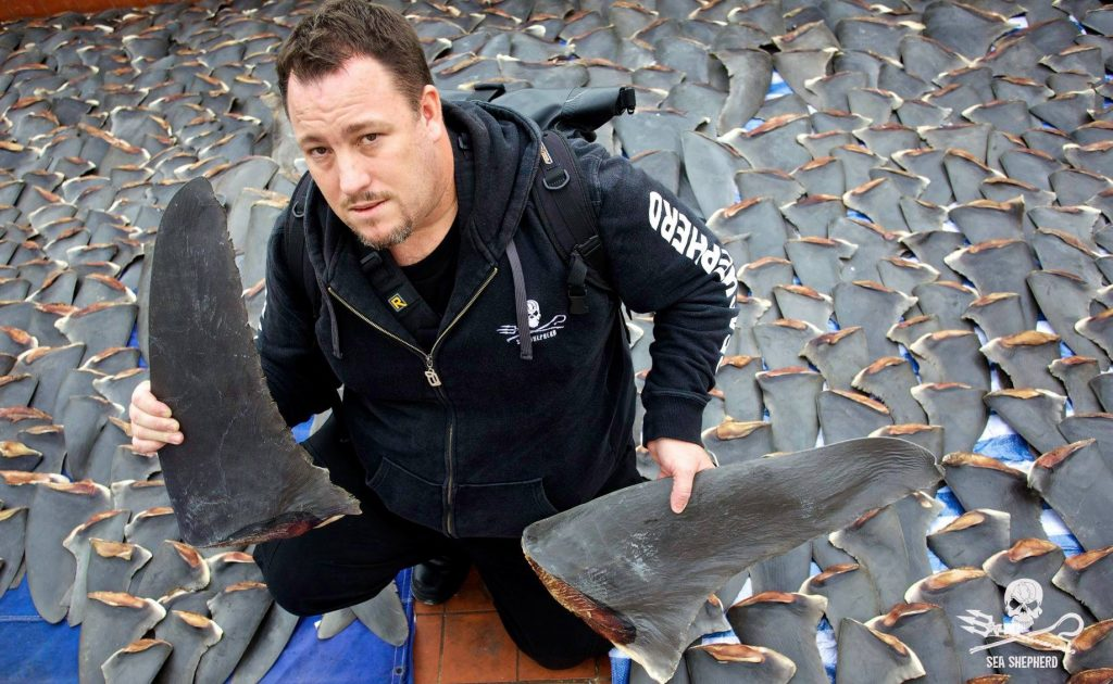 Sea Shepherd with shark fins